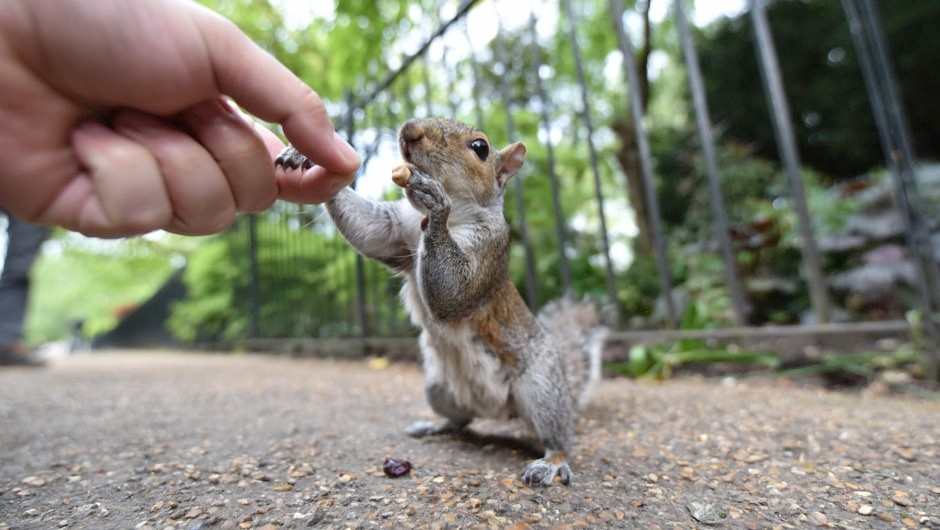 Paw control: Squirrels with hand preference 'less efficient at learning new tasks'