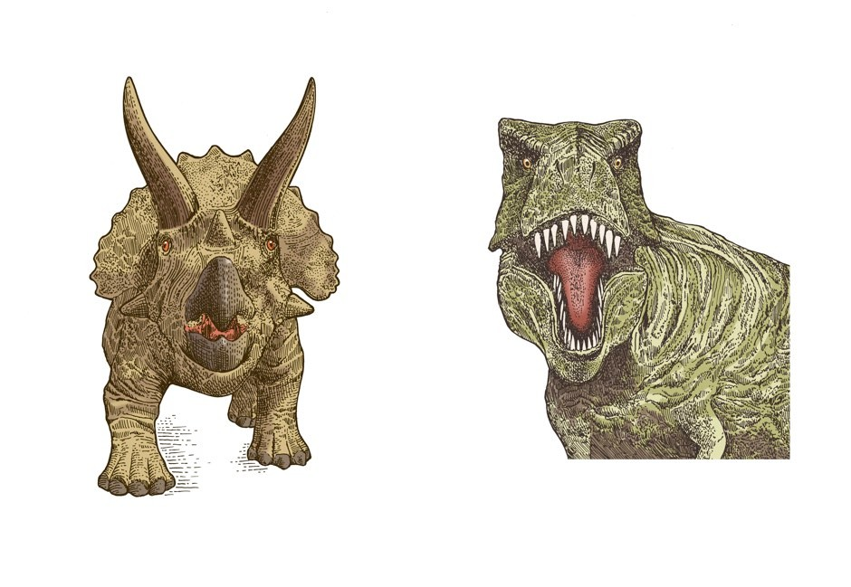 Triceratops (left) and T. rex © Rachel Caldwell