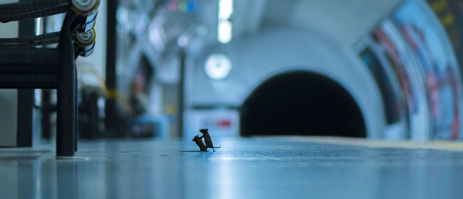 The mice of the London Underground win the Wildlife Photographer of the Year 2019 LUMIX People's Choice Award