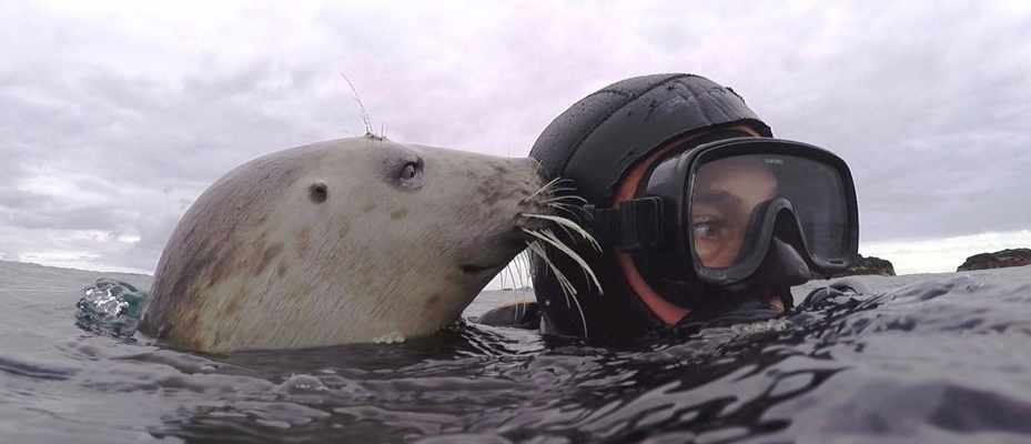 Seal in the wild caught clapping for the first time © Ben Burville/Newcastle University
