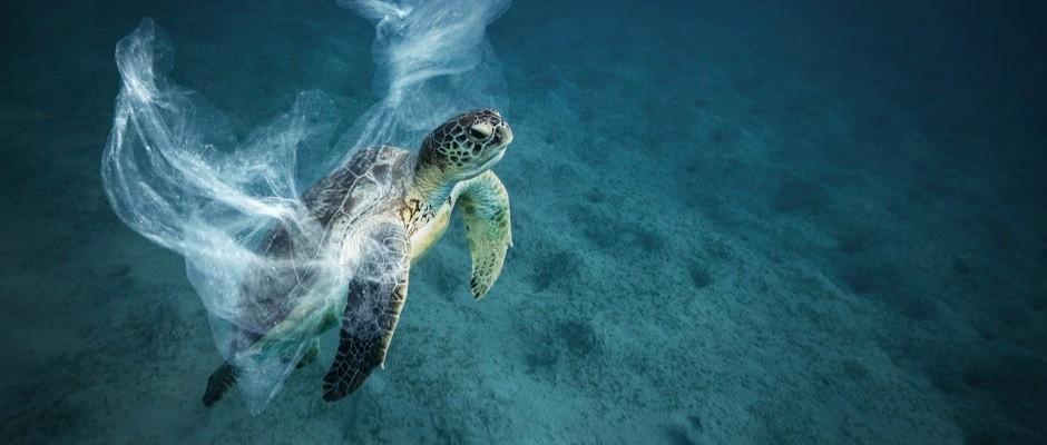 Ocean plastics smell like food to turtles