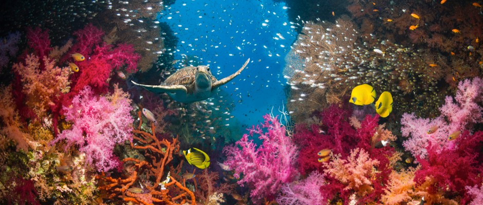Saving ocean life within a human generation is 'largely achievable' say scientists