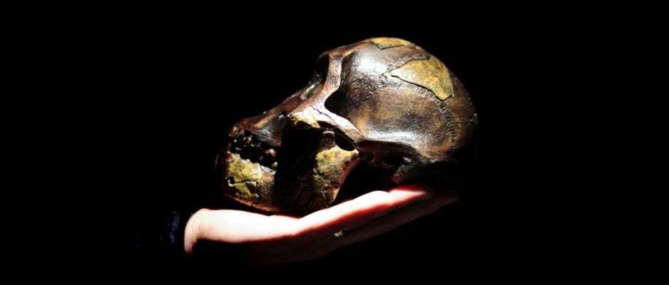 The ancestor to all hominins had a 'mosaic' of ape and human brain features