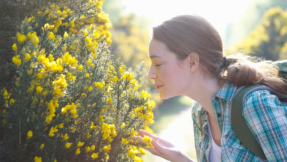 How does anosmia affect your sense of smell?