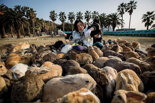 Bunny bonanza © Getty Images