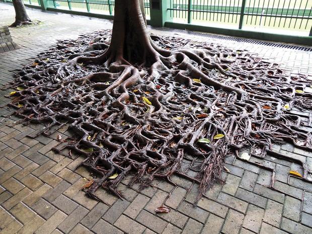 Príroda si vždy nájde cestu, aby po nás zaujala svoje miesto