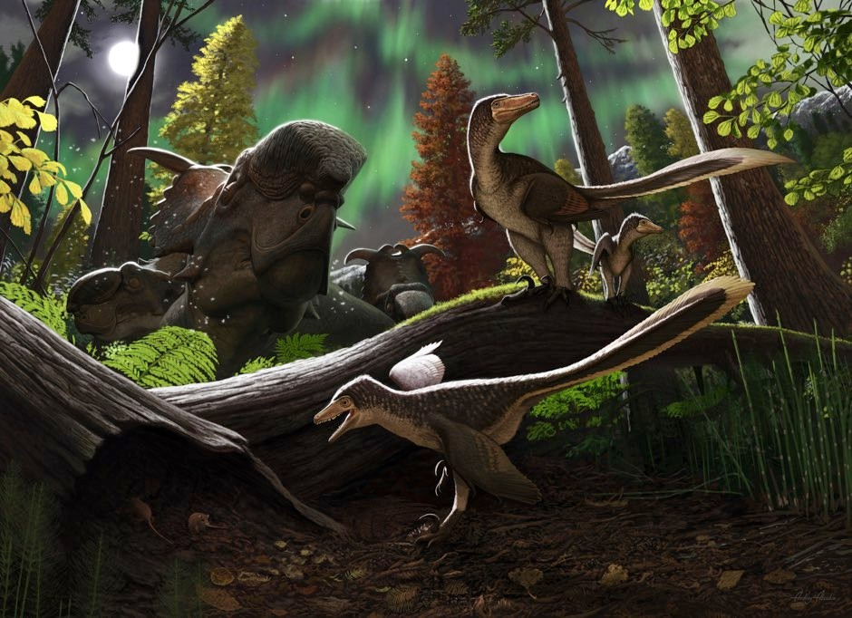 Dromaeosaurid dinosaurs 'not only lived in the Arctic but thrived there'
