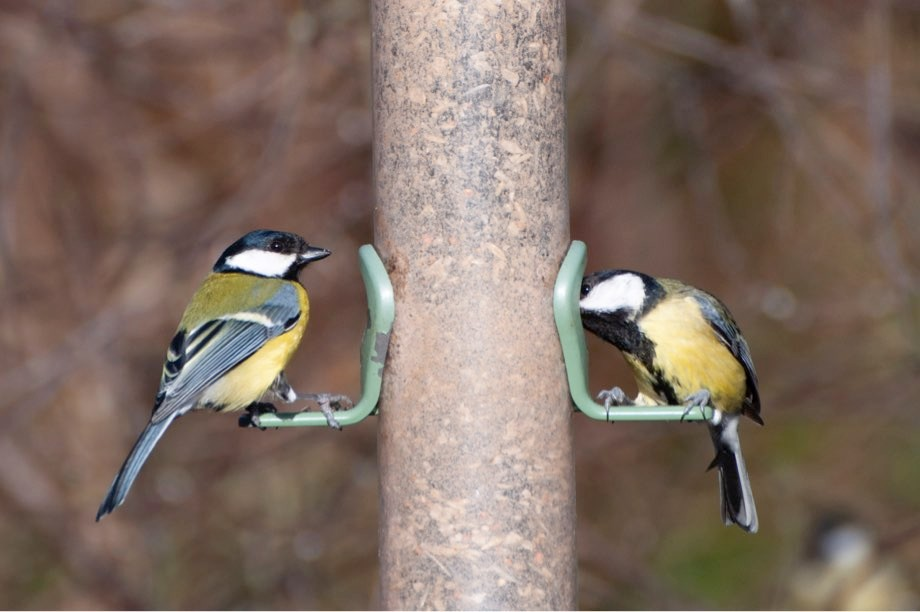 Science Focus Book Club: Further reading on birdwatching and biodiversity