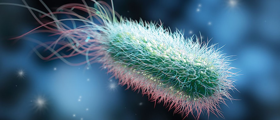 Bacteria: The miracle microbes that could fix planet