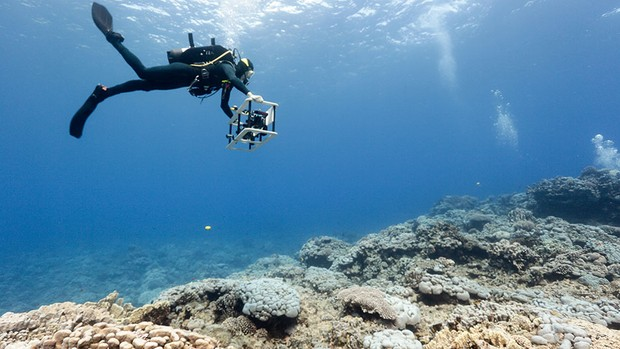 A researcher swims up and down the coral reef with a camera, taking thousands of pictures. These will be stitched together to create a 3D photomosaic to help analyse the reef © Scripps Institution of Oceanography at UC San Diego