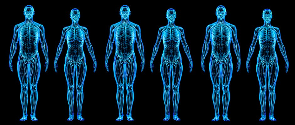 What is the human body made of?