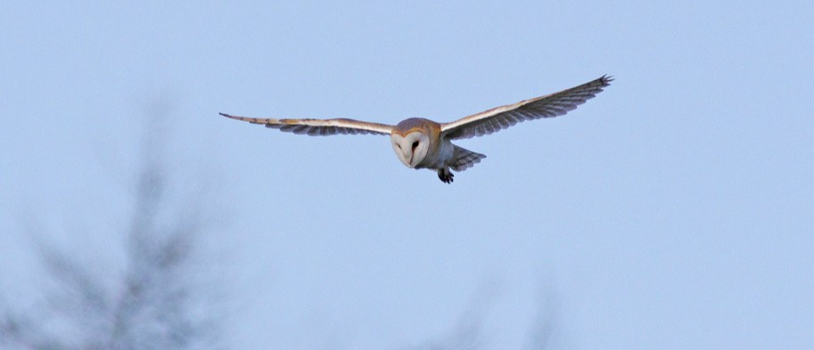 Owl's flight through gusty winds could inspire new aircraft designs - BBC Focus Magazine