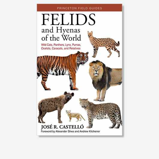 Felids and Hyenas of the World: Wildcats, Panthers, Lynx, Pumas, Ocelots, Caracals, and Relatives by José R. Castelló is out on 20 October 2020 (£25, Princeton University Press)