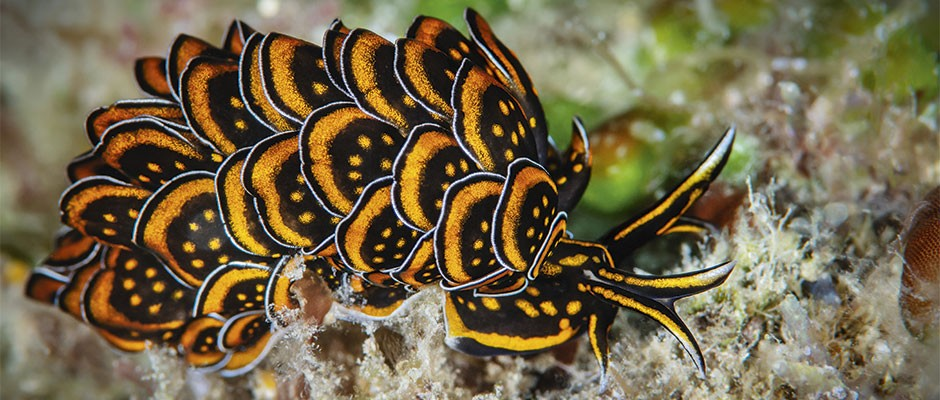 Sea slugs: 8 photos of the other-worldly creatures that live right here on Earth