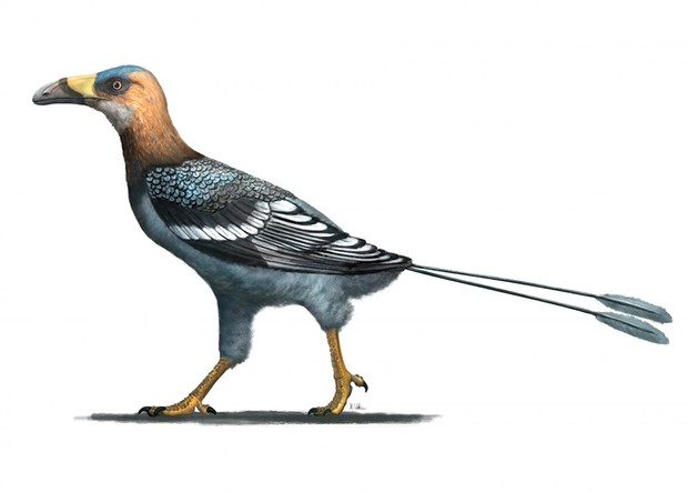 Artist reconstruction of Falcatakely © Mark Witton