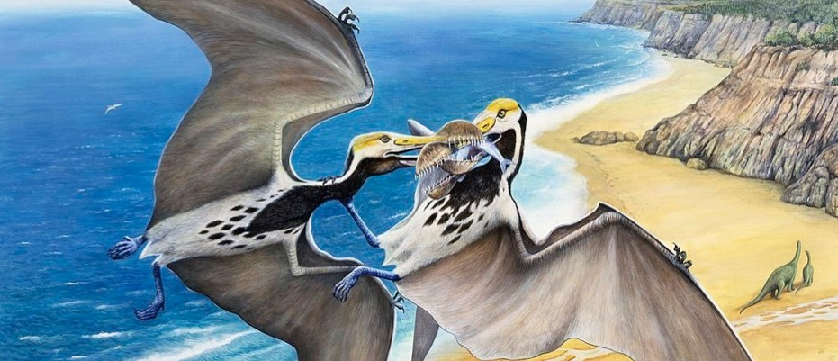 Mystery species of prehistoric flying reptile found amongst museum fossils