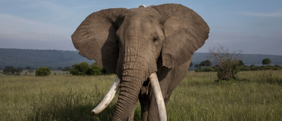 Elephant populations surveyed from space using artificial intelligence