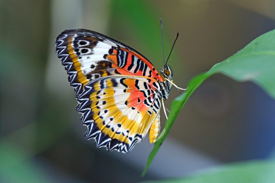 Butterfly resting on a leaf © Getty Images