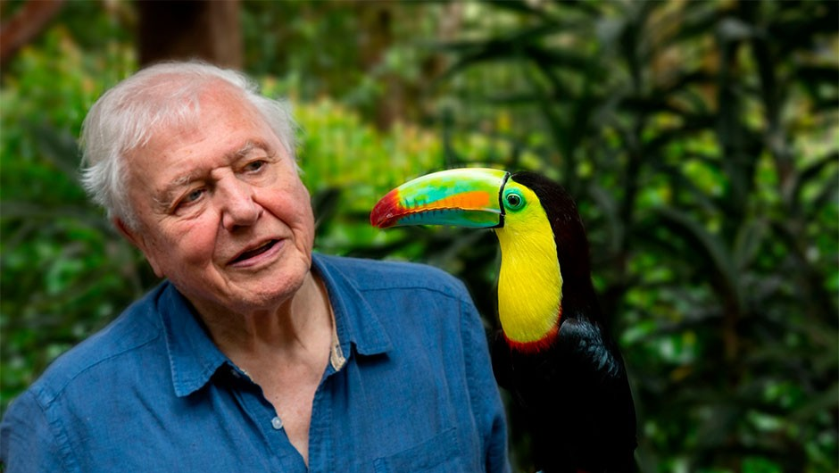What animals are on David Attenborough's Life in Colour episode 2?
