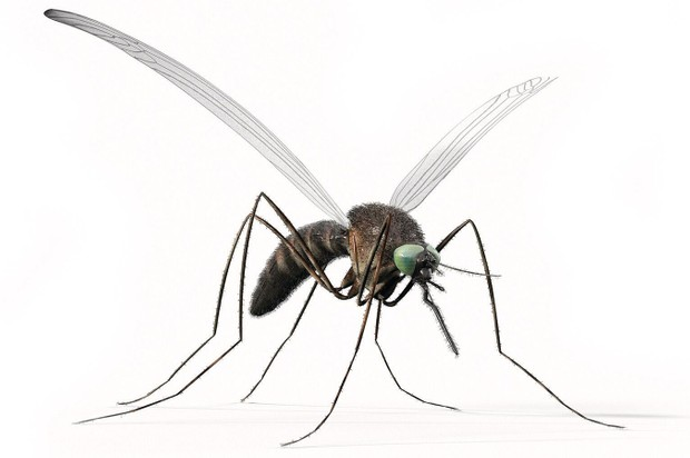Deadliest creatures - Mosquito © Getty Images