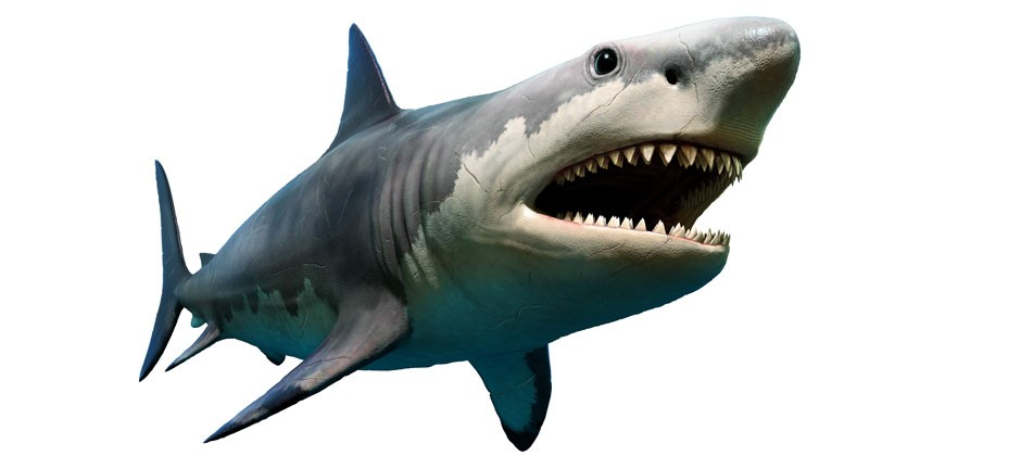 Get your 18cm teeth into these killer megalodon shark facts