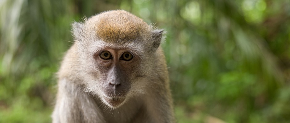 Chimeras: Scientists have created human-monkey embryonic cells