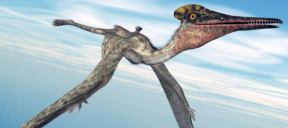 """Mystery of the pterosaurs and their """"ridiculously long"""" neck finally solved"""