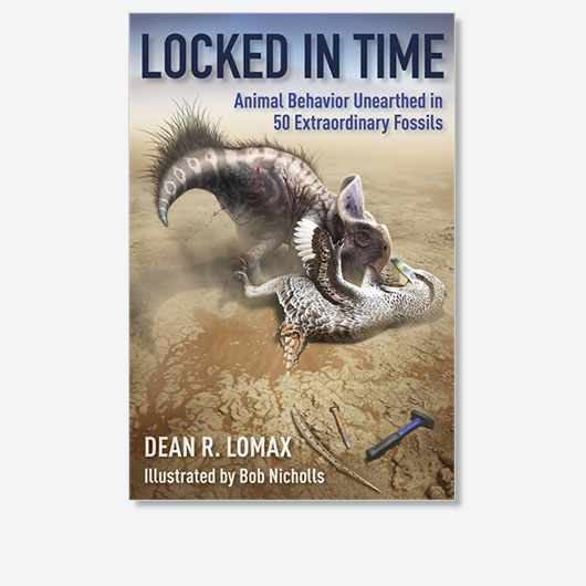 Locked in Time: Animal Behavior Unearthed in 50 Extraordinary Fossils by Dean R Lomax is out now (£25, Columbia University Press)