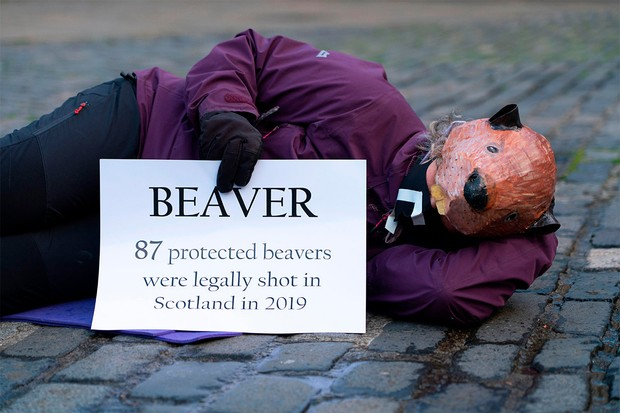 A protester wearing a beaver mask © Alamy