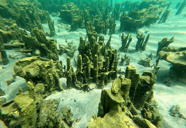 BITLIS, TURKEY - AUGUST 08: An underwater photo shows the new microbialites discovered at Lake Van in Adilcevaz district of Turkey's Bitlis province on August 08, 2021. (Photo by Ali Ethem Keskin/Anadolu Agency via Getty Images)