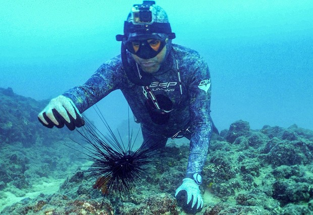 A freediver prepares to collect a specimen of Diadema setosum long-spined sea urchin, typically native to Indo-Pacific waters and currently invading the eastern Mediteranean sea, some 17 meters underwater off the shore of Lebanon's northern coastal city of Qalamun on August 11, 2021. (Photo by Ibrahim CHALHOUB / AFP) (Photo by IBRAHIM CHALHOUB/AFP via Getty Images)