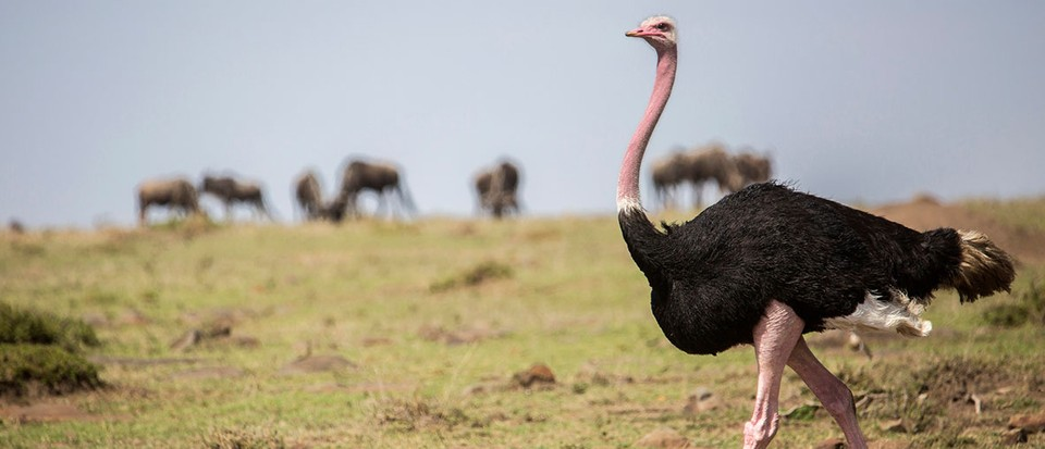 Top 10: The world's largest birds