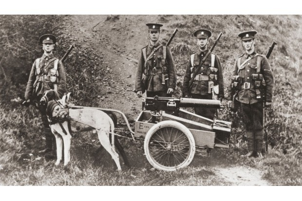 British army soldiers using dogs to pull a machine gun during the First World War. (© Classic Image/Alamy)