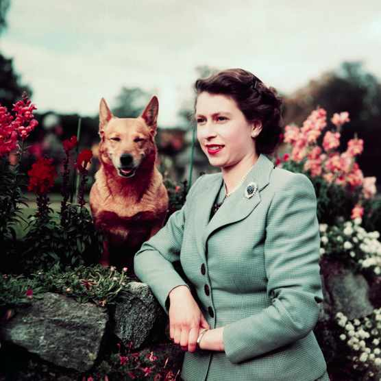 Queen Elizabeth II in a garden with one of her dogs, March 1953. (Photo by Bettmann via Getty Images)