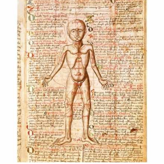 An anatomical chart of the human body, from the 15th-century Tractatabus de Pestilentia (Treatise on Plague). (Photo by The Art Archive/Alamy)