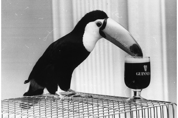 By the outbreak of the First World War in 1914, Guinness was the biggest brewery in the British empire. (Photo by Rob Cousins/Evening Standard/Getty Images)
