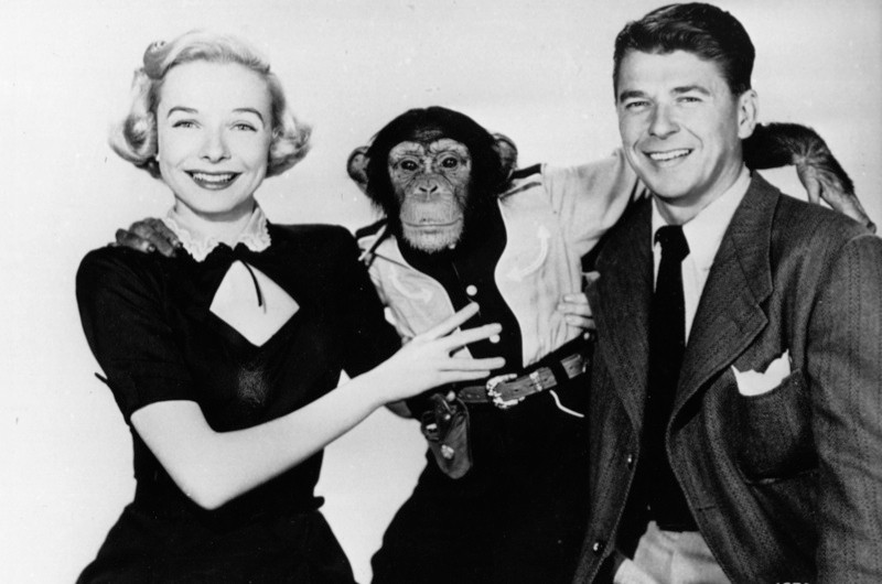 Diana Lynn, Bonzo the chimpanzee, and Ronald Reagan in a publicity photo for the 1951 film 'Bedtime for Bonzo'. (Photo by Bettmann/Getty Images)