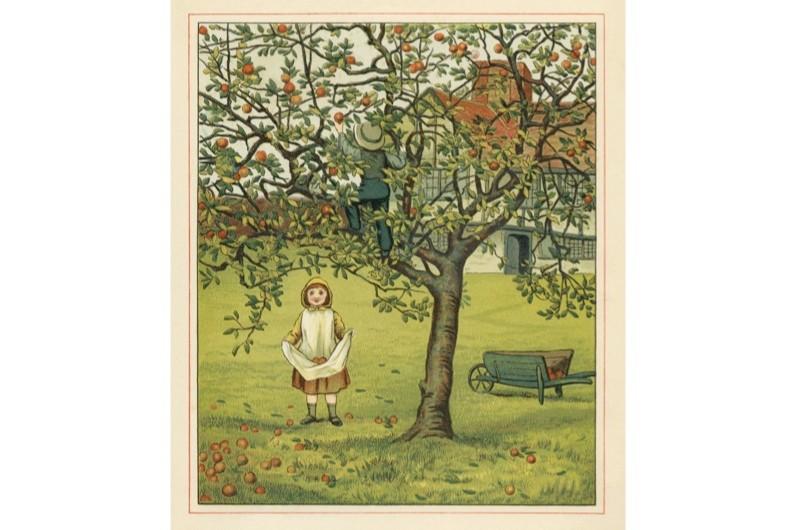 Apples-pic-2-4038d78