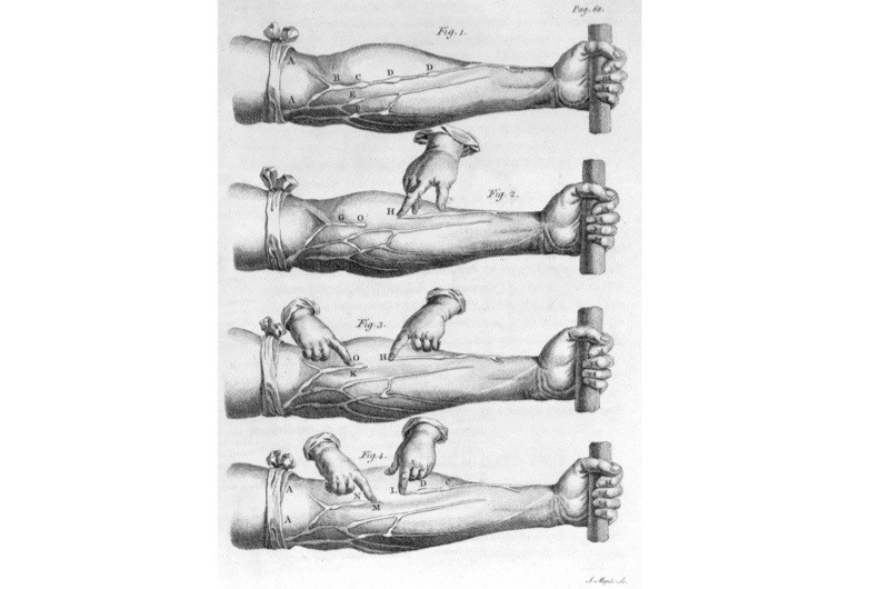 A giant leap for mankind: William Harvey reveals the circulation of ...