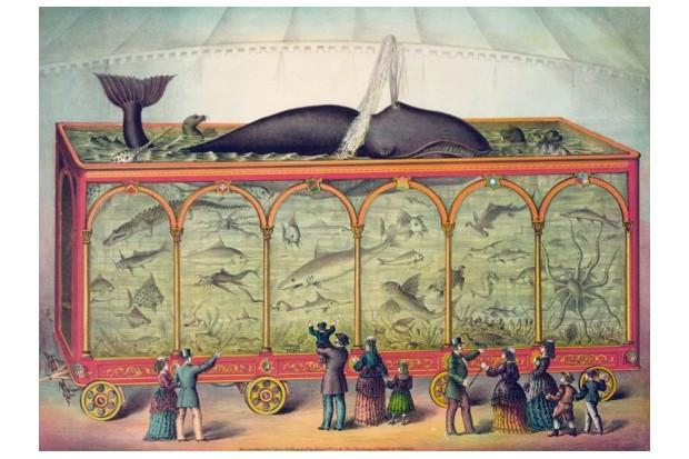 Circus20aquarium-d0ce38f