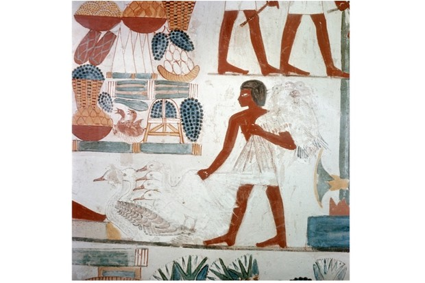 History extra explains what did people eat in ancient egypt what did people eat in ancient egypt forumfinder Images