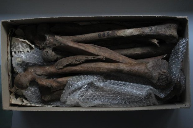 Bones from the Duckworth Collection at the University of Cambridge