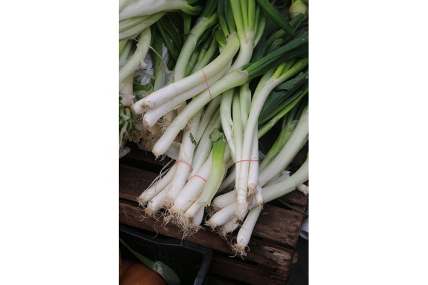 Scallions or spring onions? The plant was called 'scallion' in northern England, as well as northern Ireland, and from there it was bequeathed to North America, says James Evans. (Photo by Waring Abbott/Getty Images)
