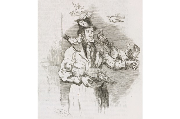 Victoria was a fan of birds and kept several parrots during her lifetime. She also kept pigeons, some of which are shown here in this engraving from the 19th century. (De Agostini Library)