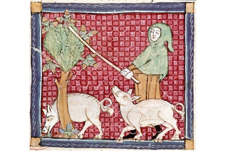 7 weird and wonderful medieval facts