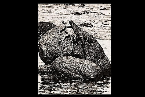 Two lizards on top of a rock.