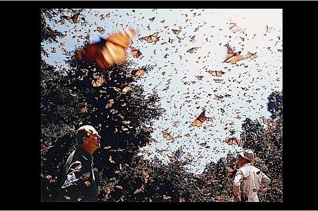 Butterflies take flight around Prince Philip.