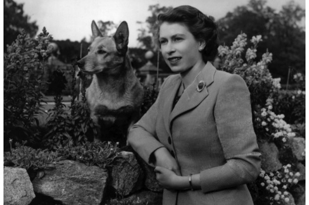 Queen Elizabeth II at Balmoral Castle with one of her corgis, 28 September 1952. (Photo by Lisa Sheridan/Studio Lisa/Getty Images)