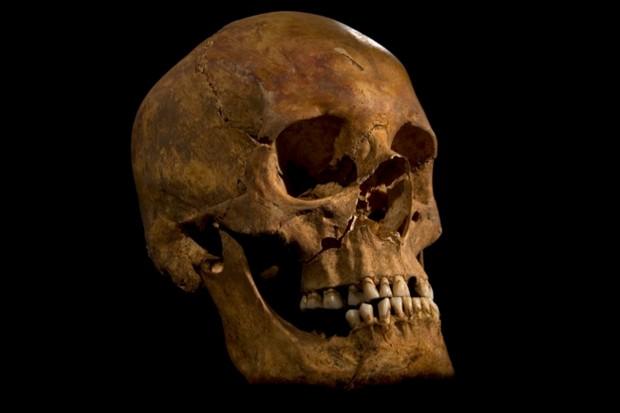 Richard-III-skull_0-e2cbe49