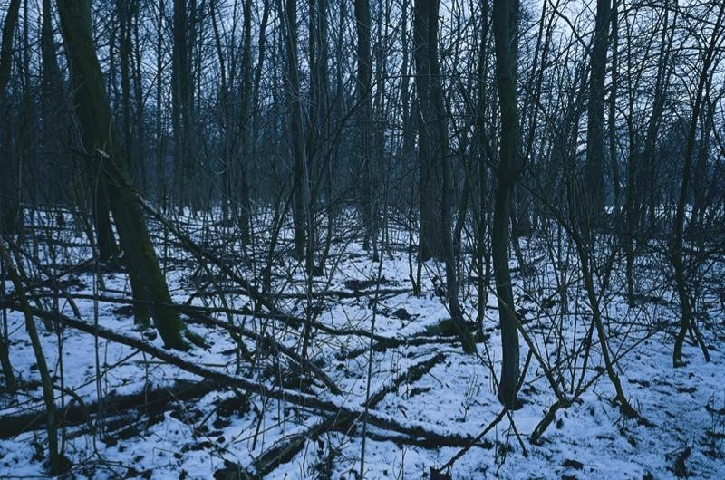 Trees and snow. Photo taken by British photographer Chloe Dewe Mathews as part of her series focussing on the locations at which individuals were shot during the First World War.